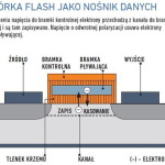 komorka_flash